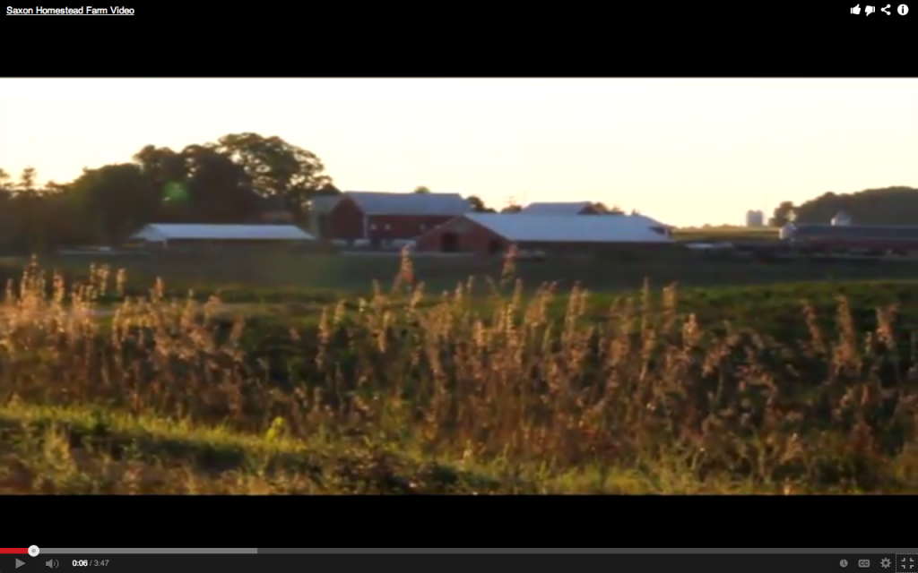 Saxon Homestead Farm Video
