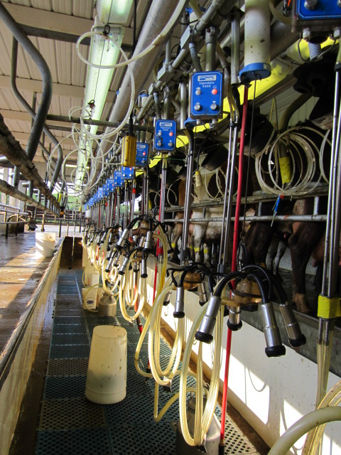 Our milking parlor is a swing parlor that holds 28 cows on each side.