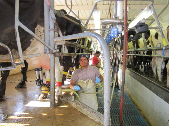 An employee gives a smile during the morning milking!